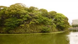 新緑の茶臼山