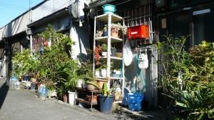 玄関先の庭園